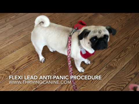 Flexi Lead Anti-Panic Safety Procedure