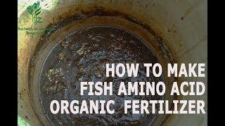 How to Make Fish Amino Acid Organic Fertilizer  ( ഫിഷ് അമിനോ ആസിഡ് തയ്യാറാക്കുന്ന വിധം )