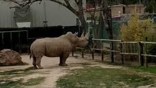 Rhino Enrichment!