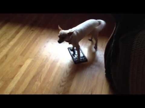 Dog stuck to sticky mouse pad