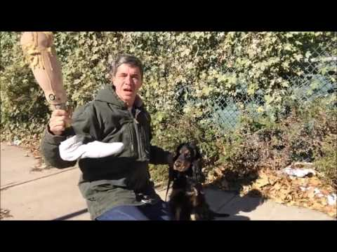 3 month dog training plan for Service dog