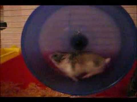 Loud hamster wheel- hamster running- solution