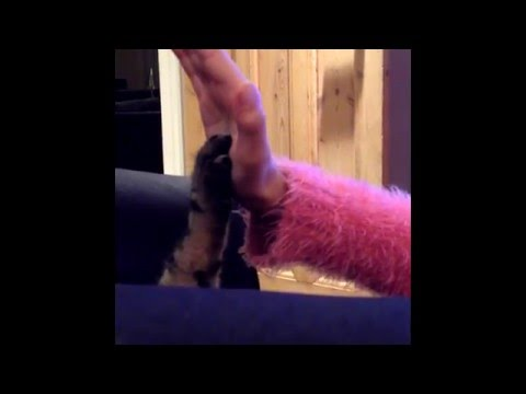 cat high five - funny - must watch
