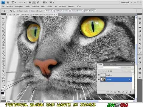 Tutorial Photoshop CS4 - color splash - photo in black and white with colored parts