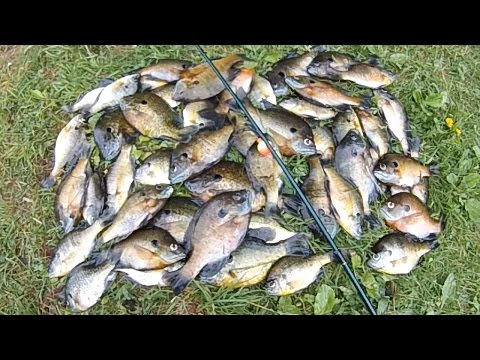 Bait Fishing #126 - Fast Bluegill Bobber Fishing with Worms