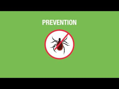 Lyme Disease: What You Need to Know