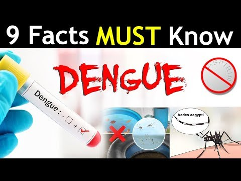 9 Facts You Must Know About Dengue !!!