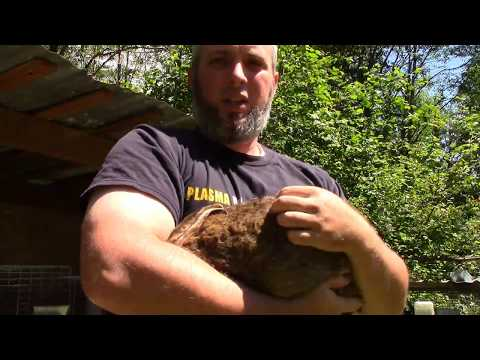 Cheap and Easy Rabbit Ear Mite Treatment