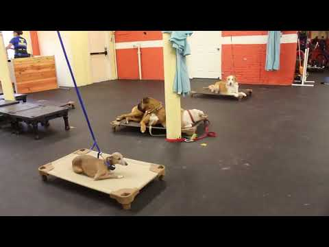 Typical Day at the Dog Training Center | Cleaning and Training