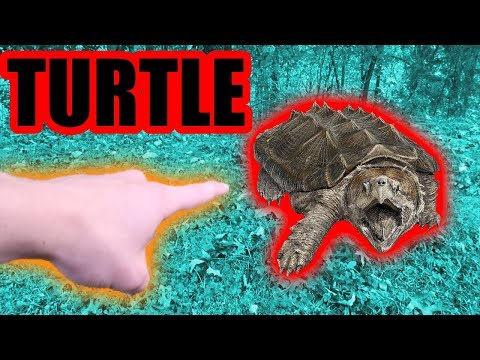 Snapping Turtle Catch n' Cook! Part 1