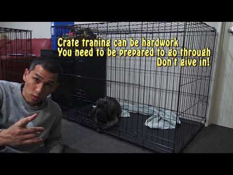 Help puppy stop crying at night in crate - Day 1 (First Night)