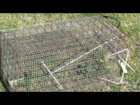 Make your own Rabbit trap using recycled materials