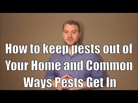 How to keep pests out of your home: Common entry points you should know