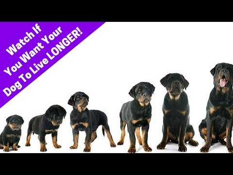 3 Tips To Make Your Dog Live Longer! How To Increase Your Dog's Lifespan.