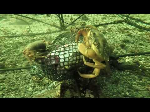 Krabbeteine Under Vann - Undervannsfilming - GoPro