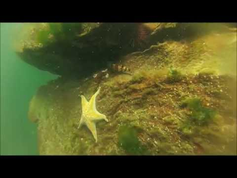 Freedive Spearfishing - Vancouver Island, BC