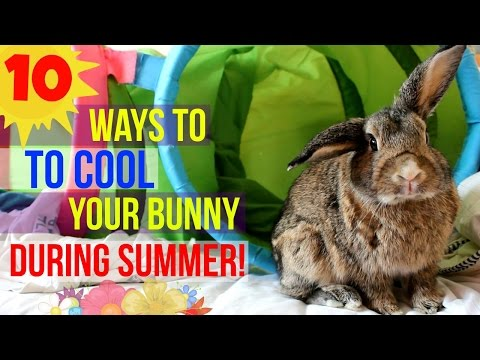 10 Ways to Keep your Bunny Cool During the Summer