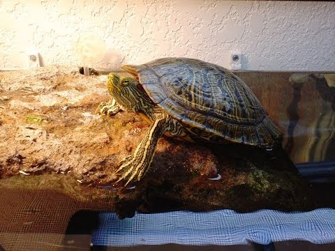 TiddlesTopia!! Mr turtles new tank! Tank set up for my red eared slider. Space saving.