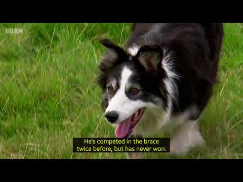 Countryfile - One Man & His Dog 2017 - Team Ireland