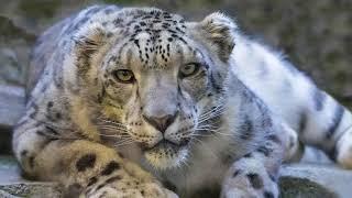 23 RAREST Animals in the World