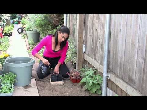 How to Landscape With Lettuce