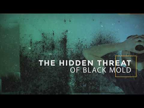 Mold Toxicity | The Hidden Threat of Black Mold