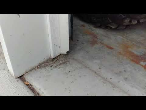 Fix mouse holes in garage door seals