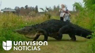 Noticiero Univision #EdicionDigital 1/17/17