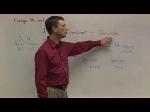 Biology 1107 - Genetics and Punnett Squares