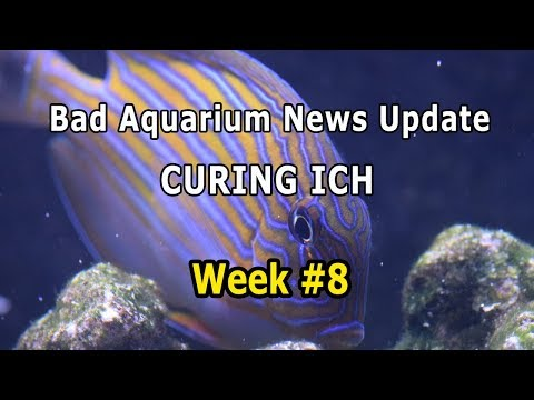 Bad Aquarium News, Saltwater ICH (white spot) and Treatment, Week #8 | HOW TO Cycle Reef Tank