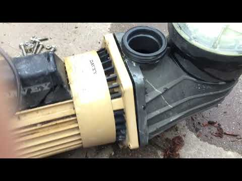 How to pull apart a Swimming pool Pump. What's Inside? I show&explain Davey casing housing change