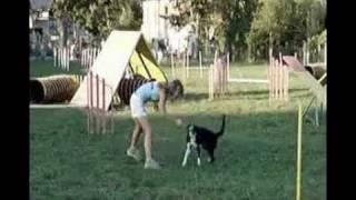 Bi, agility training