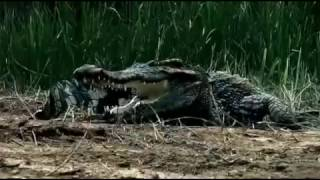 #x202b;فيلم روعة شاهد ولن تندم Crocodile  Film Horror#x202c;lrm;