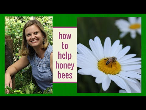 How to Help Honey Bees