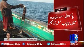 Rare breed of fish in Pakistani maritime boundary