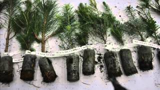 How To Make Money Growing Trees