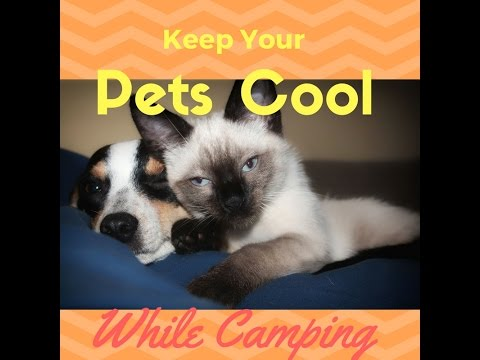 How to Keep Dogs Cats and Pets Cool in your RV or Camper! Travel with Pets