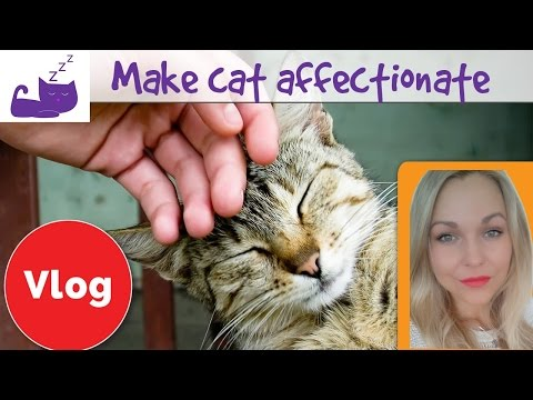 🐱 5 ways to make your cat more affectionate 🐱