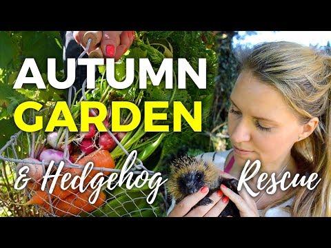 Autumn Gardening Ideas + Hedgehog Rescue