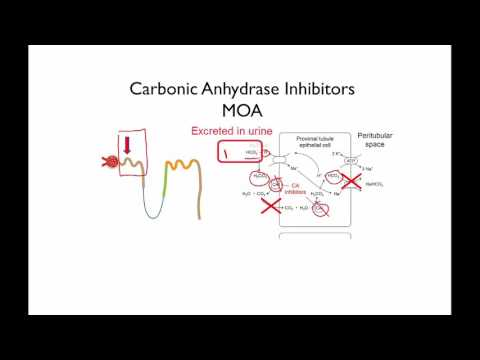 Carbonic Anhydrase Inhibitors