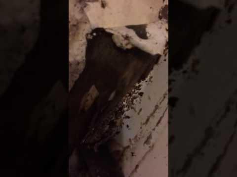 Wood bugs