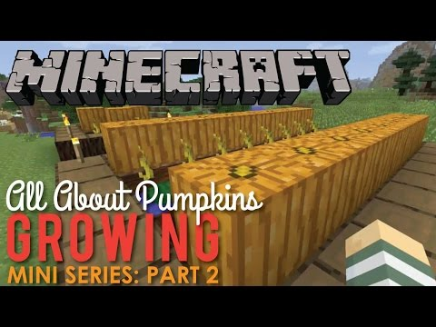 All About Growing Pumpkins in Minecraft, Part 2