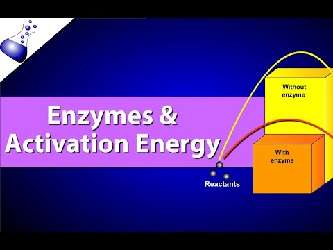 Enzymes and Activation Energy