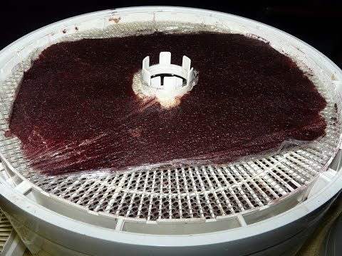 Making Fruit Roll Ups / Fruit leather on the dehydrator / Dehydrating / Dehydrated