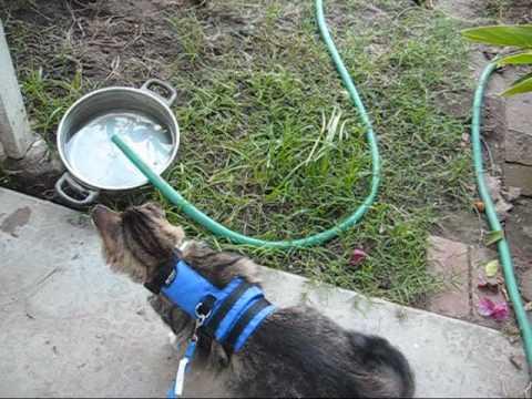 Teach your cat to walk on a leash tutorial