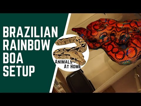 Brazilian Rainbow Boa Setup