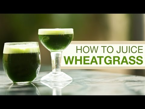 How to Grow Wheatgrass & Make Wheatgrass Juice at Home