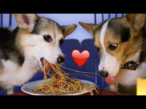 Lady & the Tramp Valentines Spaghetti for CORGIS || Life After College: Ep. 584