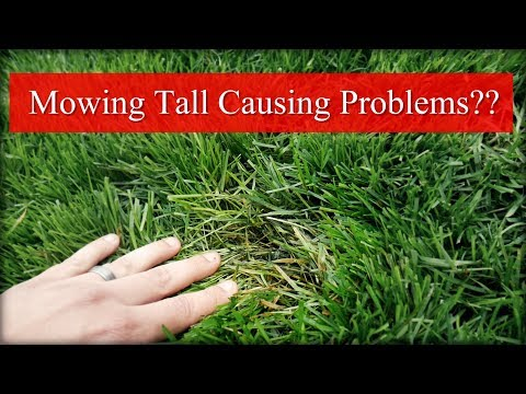 Can Mowing Tall Cause Problems?