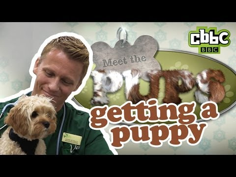 CBBC: Meet The Pups - How to Choose a Puppy